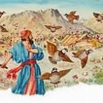 Codornizes no Deserto